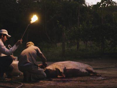 """Documentário """"Paulistas"""" chega para contar impacto da monocultura agrícola na vida da família do diretor no interior de Goiás"""